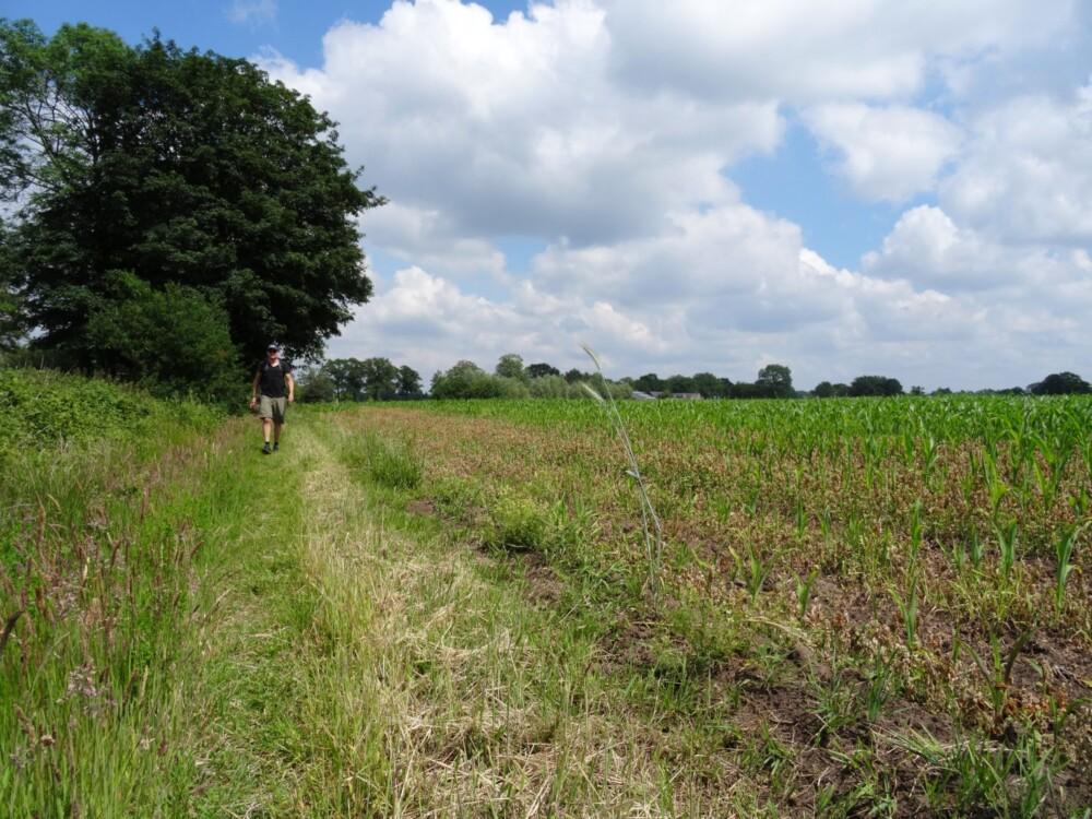 Het toppunt van klompenpad Boereneschpad: over boerenland langs de maisvelden.